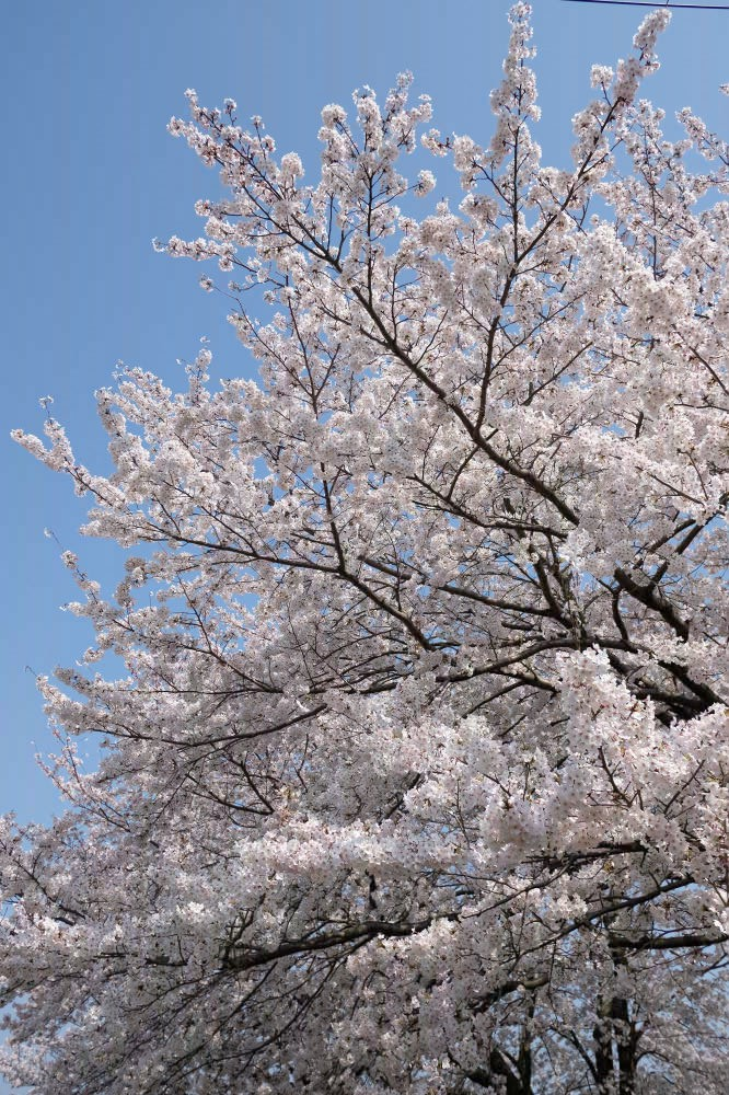 spring2019_01